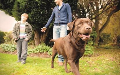 Aj váš pes pravidelne uteká alebo preskakuje plot? Skoncujte s tým raz a navždy!