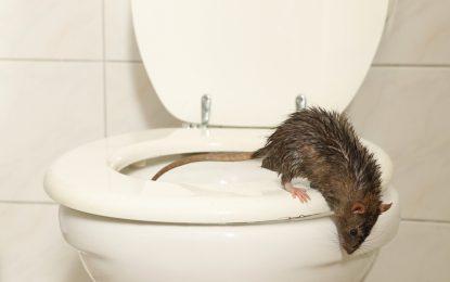 Trápia vás myši, vtáky alebo túlavé psy? Vyskúšajte obľúbený plašič zvierat